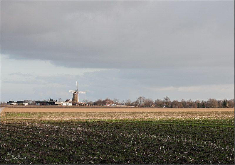 De Hollandsche molen, Neede