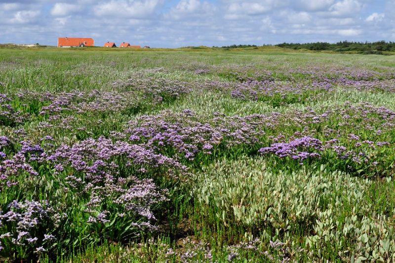 boswachterspad-posthuiswad-kroonpolder-bloemen