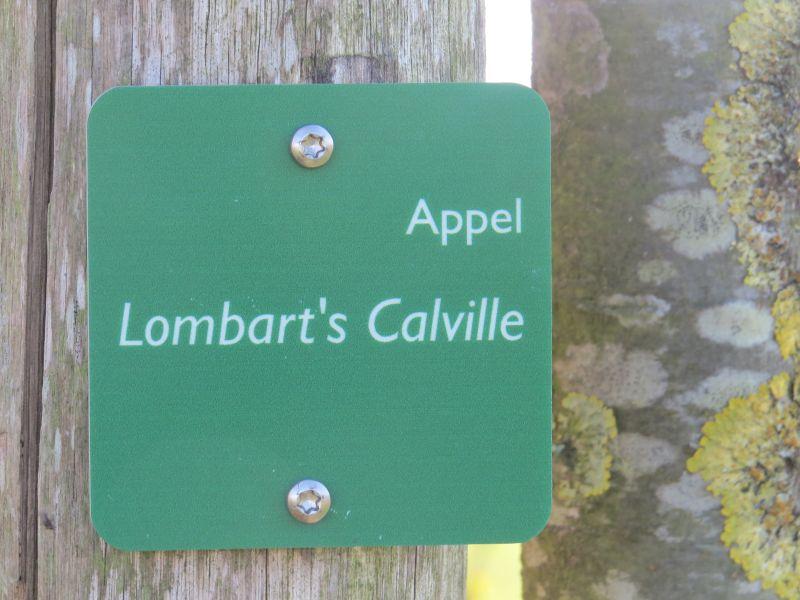 camping Zeelanderij heeft nog bijzondere appelbomen staan waaronder de Lombart's Calville