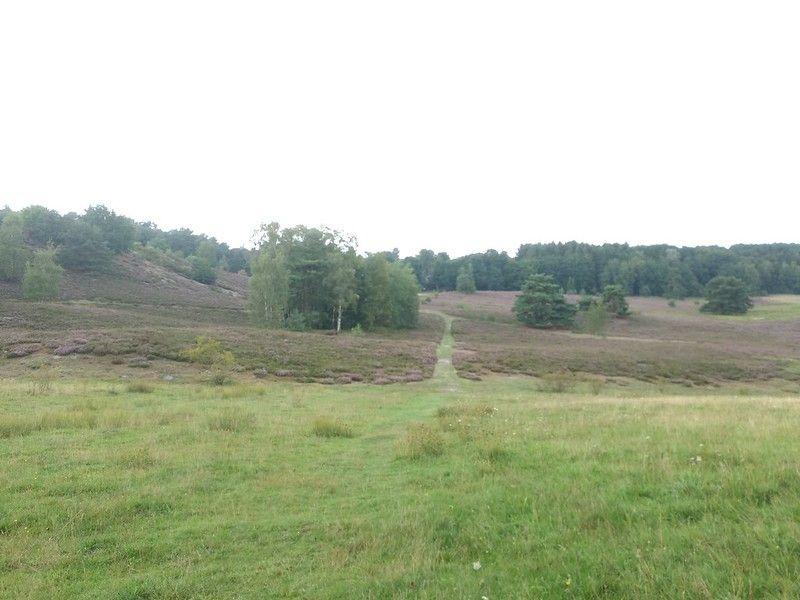 Image from D.H. de Wit