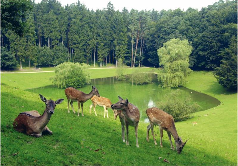 Rotwild Wildpark Schwarze Berge