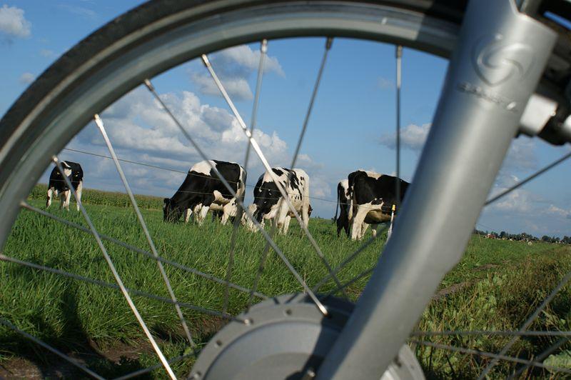 Zuid-Hollands landschap
