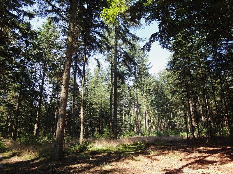 Bos tussen Lage en Hoge Vuursche