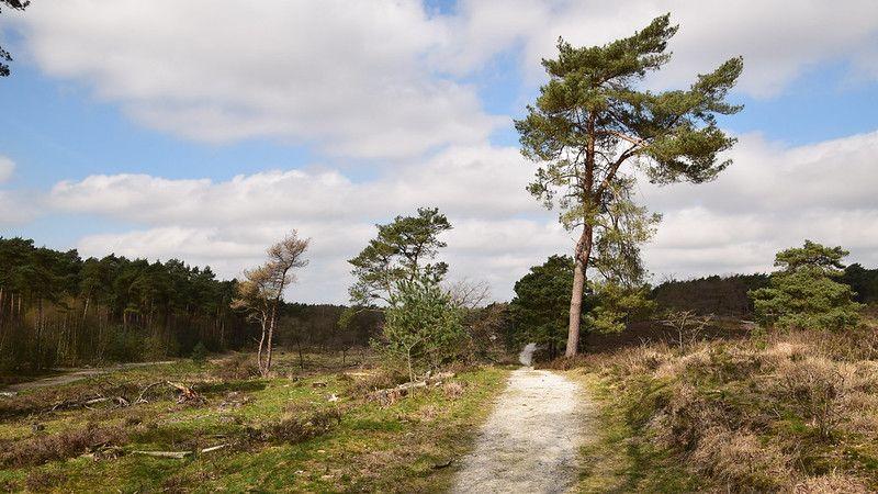 Brunsummer heath