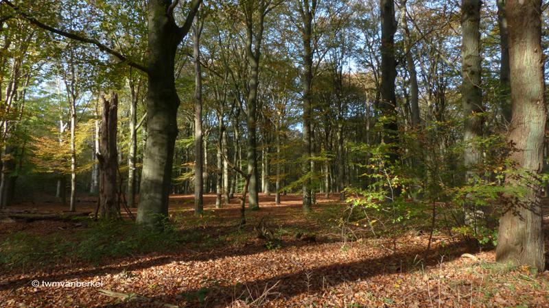 Bosgebied tegenover de Hilversumse Golfclub