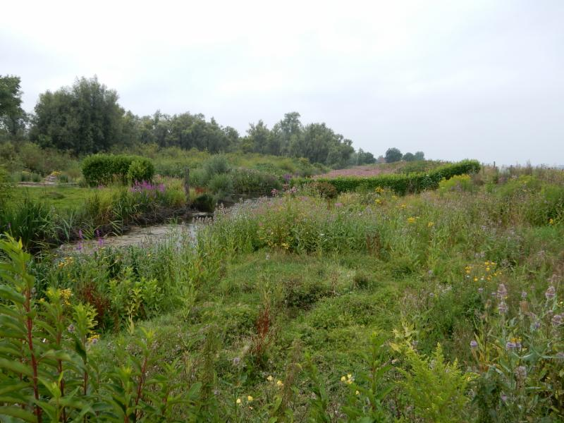 Fietsroute Biesbosch en omgeving