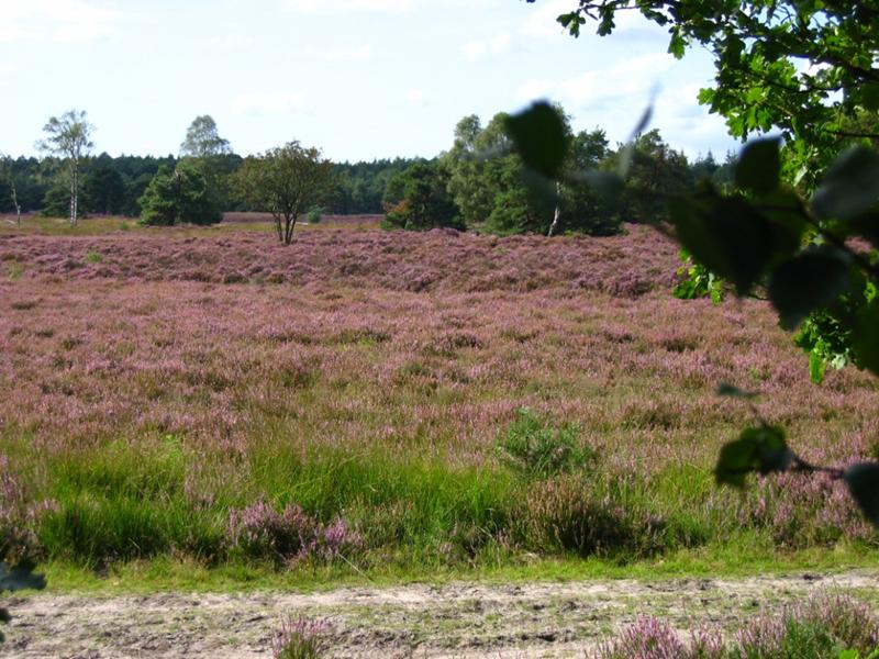 Westeindse Heide