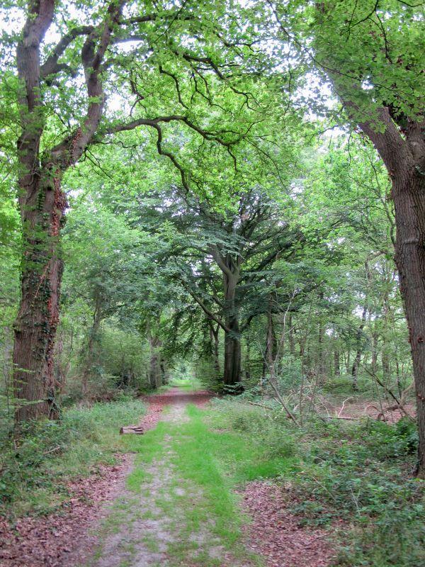 boswachterspad-westerwolde-ter-apelerbossen-wandelpad