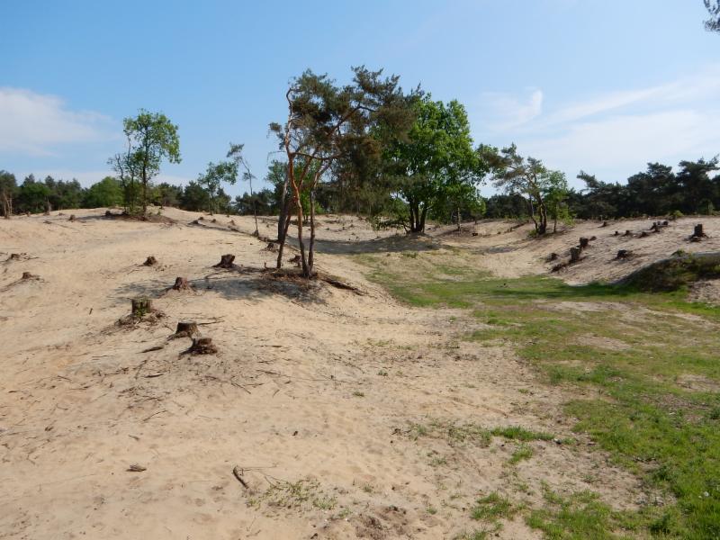 Fietsroute Arcen en omgeving