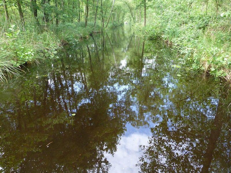 Swamps of the Weerribben (Netherlands 2014)
