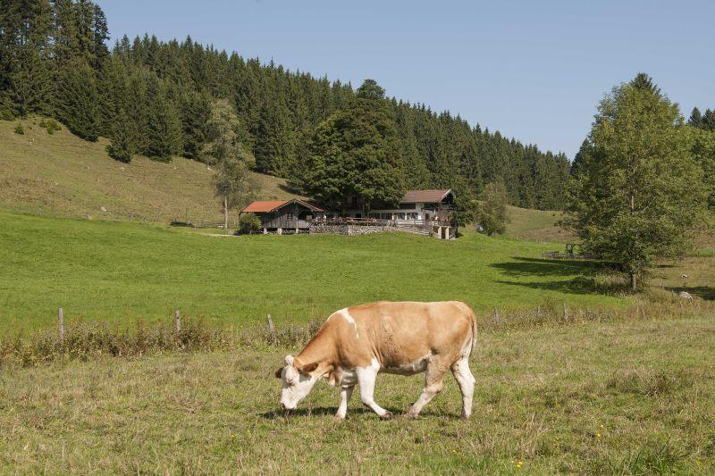 wirtsalm-ku��he (002)