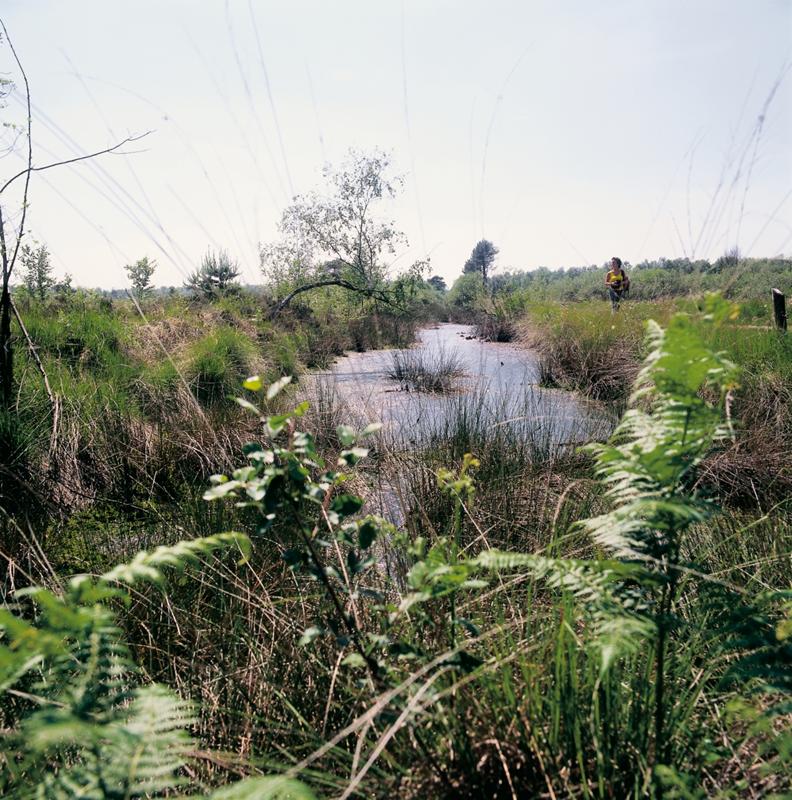 Veenwater in De Groote Peel