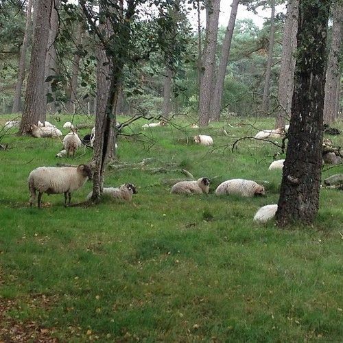 Communing with the sheep
