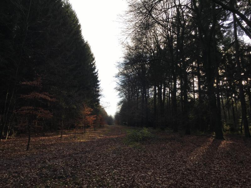 Heerlijk genieten in het buitengebied van Driebergen-Rijsenburg
