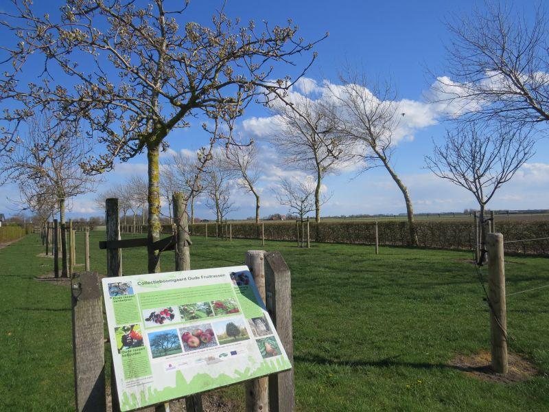 Aan de rand van camping Zeelanderij vindt u dit informatiebord met bijzondere appelbomen. Bij de picknickplek even linksaf slaan