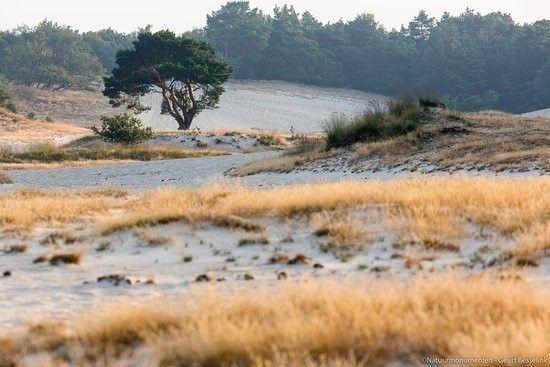 loonse en drunense duinen - groene route