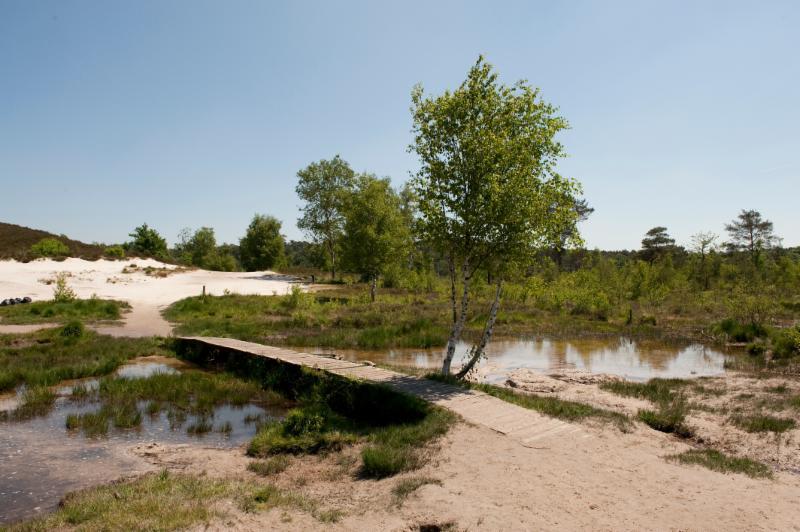 Natuurmonumenten Brunssummerheide Roode Beek liggend