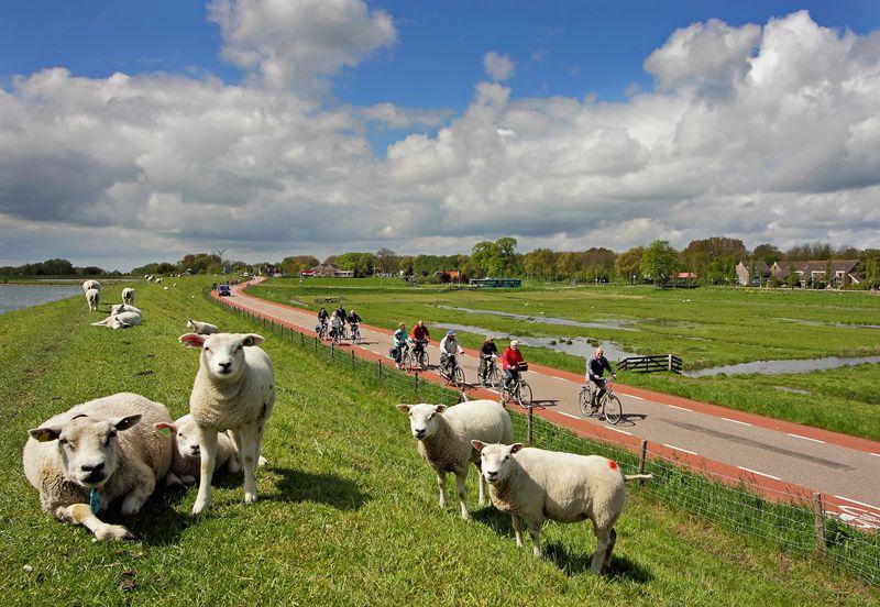 Omgeving Westfriesland