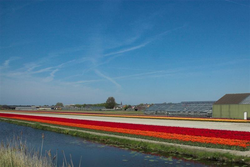 Foto: Flowers of Amsterdam