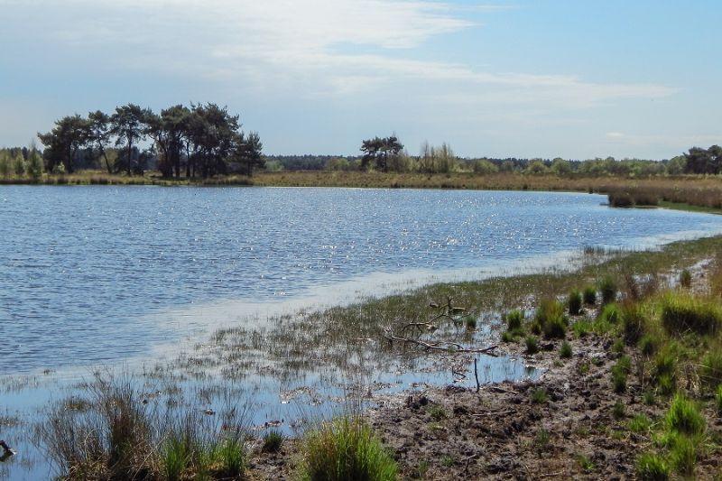 boswachterspad-heeze-leende-klein-kraanven-leenderbos