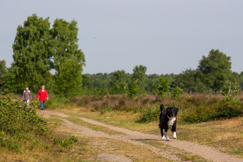Groevenbeekse Heide