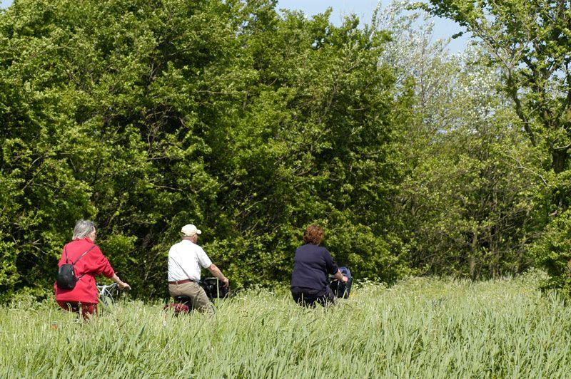 Foto 4: Fietstocht langs wad, polder, duin en bos