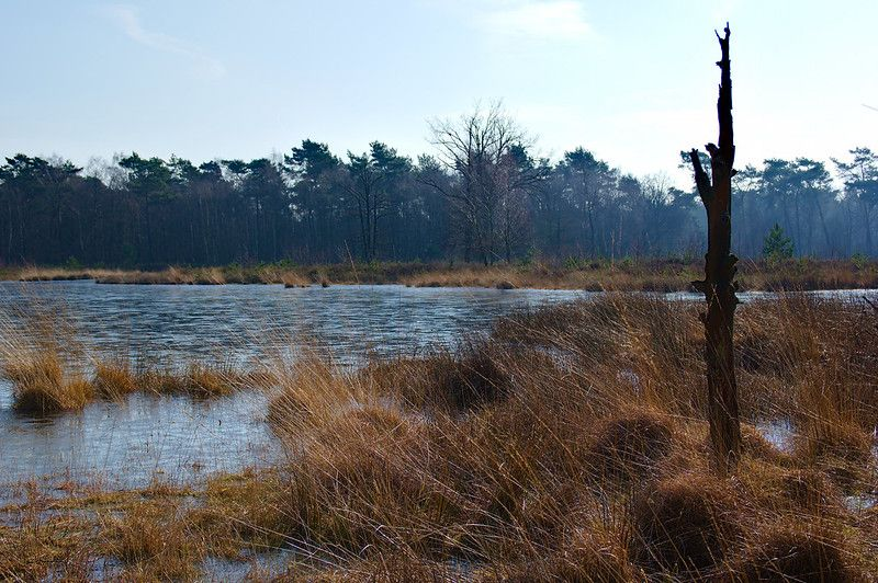 Schandelose Heide |