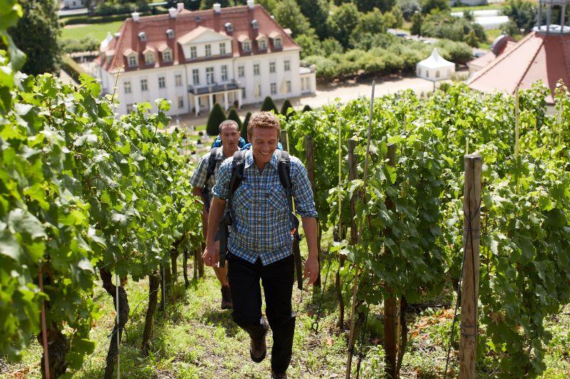 saksische wijnwandelweg