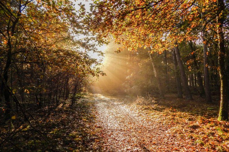 boswachterspad-heeze-leende-bochtig-pad