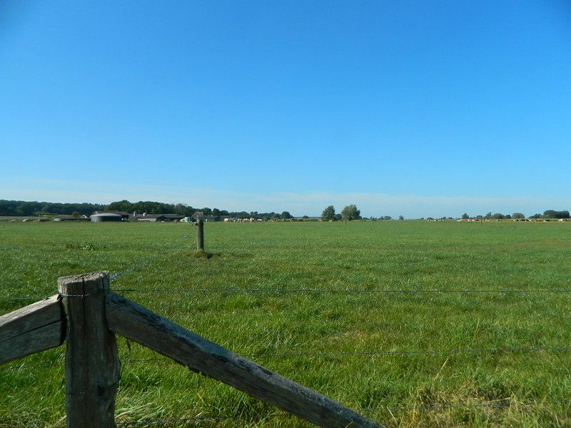 CattleField