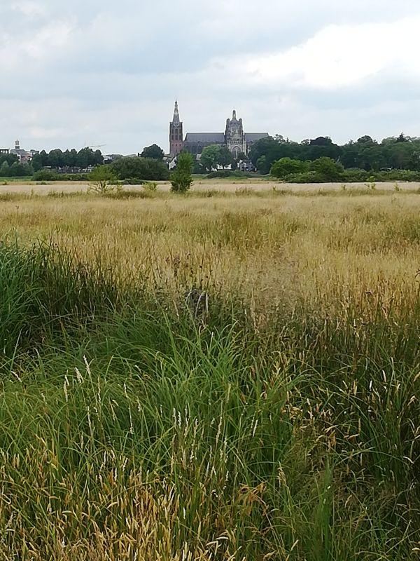Sint Jan, 's-Hertogenbosch