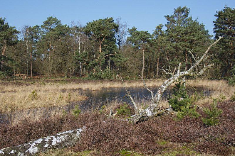 Schandelose Heide /