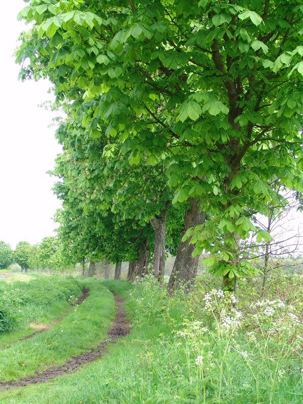 Bosrijke omgeving van Alphen-Chaam