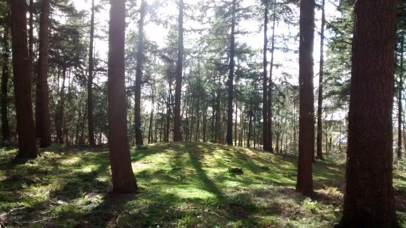 Grafheuvel Leersum