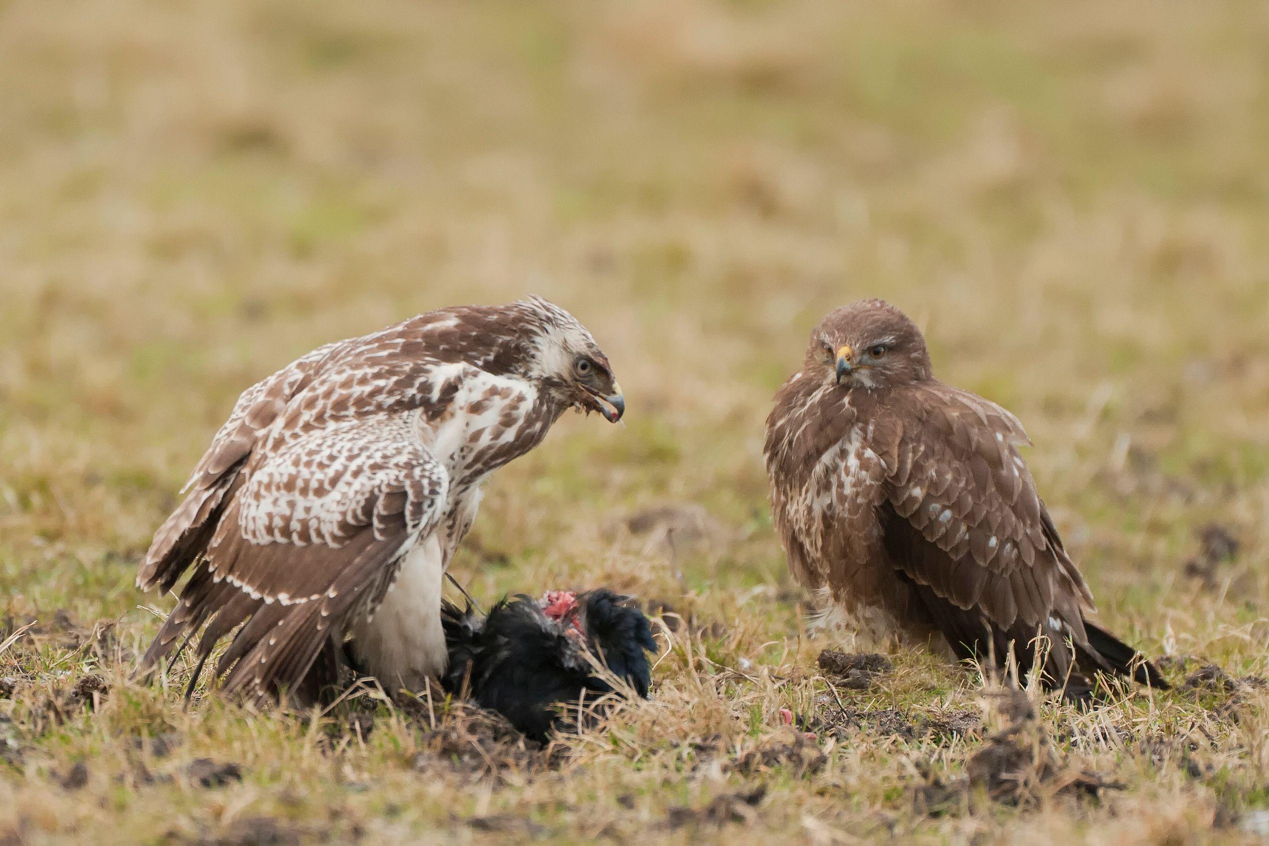Observaci�n de aves en Lauwersmeer