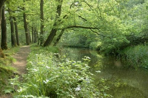 Oisterwijk, Pearl in Green